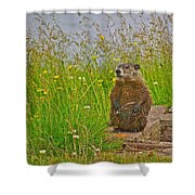Groundhog At Point Amour In Labrador Shower Curtain