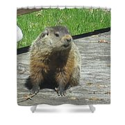 Groundhog Holding A Stick Shower Curtain