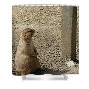 Groundhog With Shadow Shower Curtain