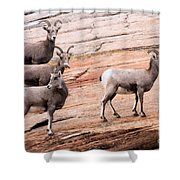 Group Leader Shower Curtain