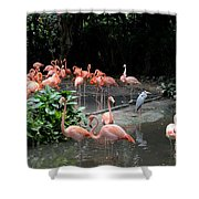 Group Of Flamingos And Lone Heron In Water Shower Curtain