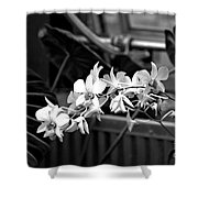 Group Of Flowers Shower Curtain