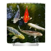 Group Of Koi 2 Shower Curtain