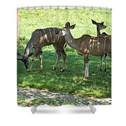 group of Kudu Antelope Shower Curtain