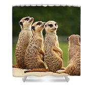 Group Of Meerkats Shower Curtain
