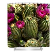 Grouping Of Cactus With Pink Flowers Shower Curtain