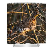 Grouse In A Tree Shower Curtain