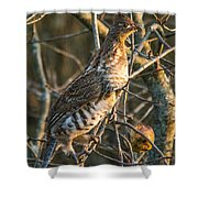 Grouse In An Apple Tree Shower Curtain