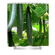 Growing Cucumbers Shower Curtain