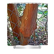 Growing Through The Fence Shower Curtain