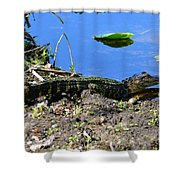 Growing Up In Florida Shower Curtain