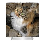 Grumpy Kitty With Emerald Eyes Shower Curtain