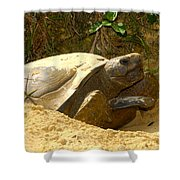 Florida Gopher Tortoise And Home Shower Curtain