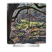 Guadalupe State Park Shower Curtain