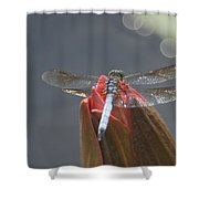 Guard Dragonfly... Shower Curtain