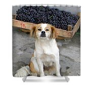 Guardian Of The Grapes Shower Curtain