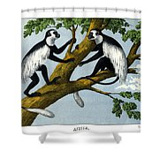 Guereza Monkey Shower Curtain