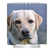 Guide Dog In Training Shower Curtain