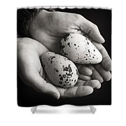 Guillemot Eggs Black And White Shower Curtain