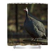 Guinea Chicken Shower Curtain