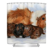 Guinea Pig Family Shower Curtain