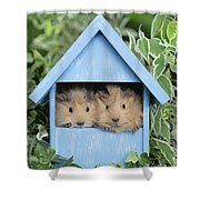 Guinea Pig In House Gp104 Shower Curtain
