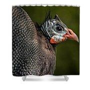 Guineafowl Shower Curtain