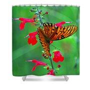 Gulf Fritillary 1 Shower Curtain