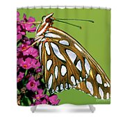Gulf Fritillary Butterfly Agraulis Shower Curtain