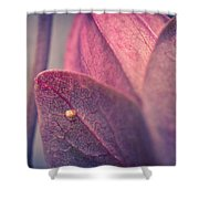 Gulf Fritillary Butterfly Egg Shower Curtain