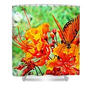 Gulf Fritillary Butterfly On Pride Of Barbados Shower Curtain