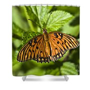 Gulf Fritillary Shower Curtain