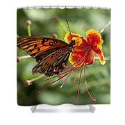Gulf Fritillary Photo Shower Curtain