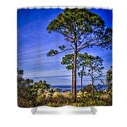 Gulf Pines Shower Curtain