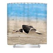 Gull At Lido Beach Iv Shower Curtain