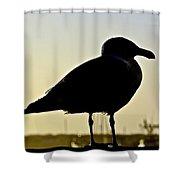 Gull At Sunset Shower Curtain