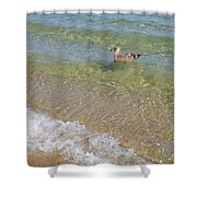 Gull Floating Shower Curtain