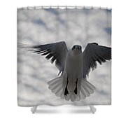 Gull From Below Shower Curtain