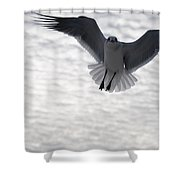 Gull From The Heavens Shower Curtain