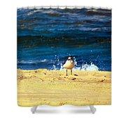 Gull Goer Shower Curtain