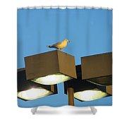 Gull On Guard Shower Curtain