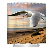 Gull On The Wing Over Beach Landscape Shower Curtain