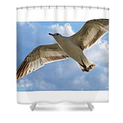 Gull - Out Of Bounds Shower Curtain