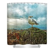 Gull Over Rome Shower Curtain