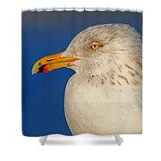Gull Portrait Shower Curtain