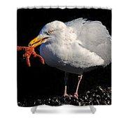 Gull With Starfish Shower Curtain