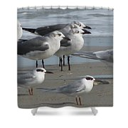 Gulls And Terns Shower Curtain