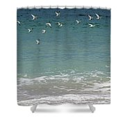 Gulls Flying Over The Ocean Shower Curtain