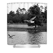 Gulls In Flight Mb083bw Shower Curtain