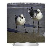 Gulls On The Beach Shower Curtain